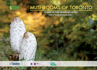 Mushrooms of Toronto PDF