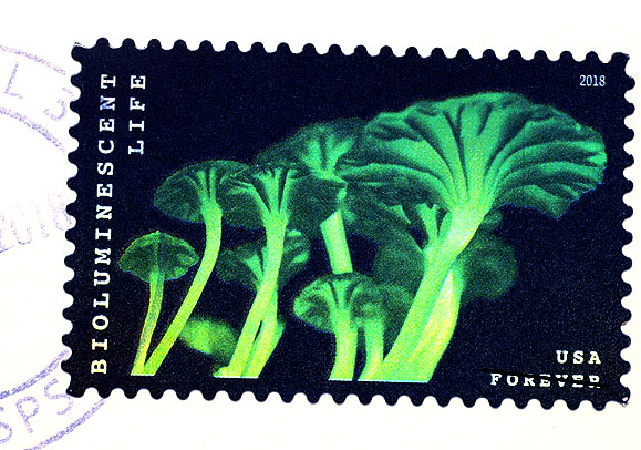 Bioluminescent fungus postage stamp